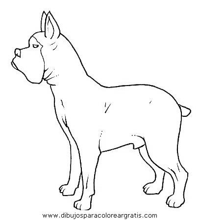 animales/perros/perros_093.JPG