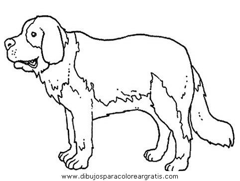animales/perros/perros_094.JPG