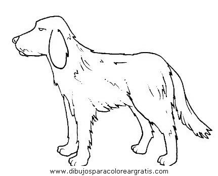 animales/perros/perros_096.JPG