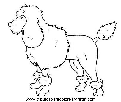 animales/perros/perros_097.JPG