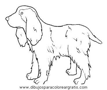 animales/perros/perros_102.JPG