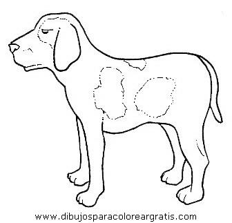 animales/perros/perros_103.JPG