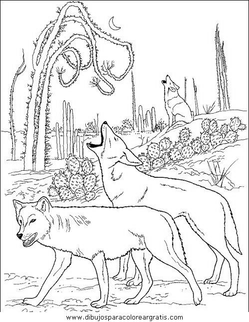 animales/perros/perros_107.JPG