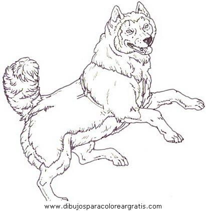 animales/perros/perros_114.JPG