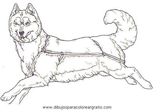 animales/perros/perros_117.JPG