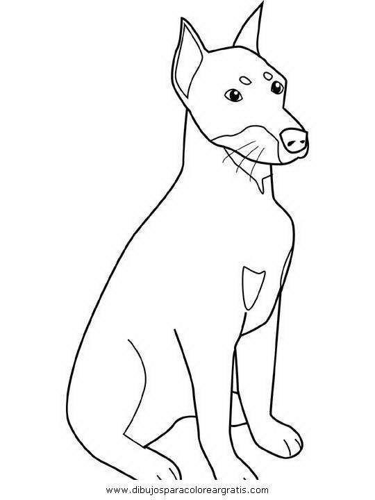 animales/perros/pitbull.JPG
