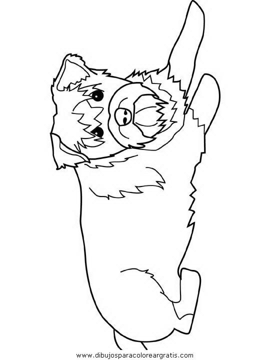 schnauzer coloring page - animales schnauzer