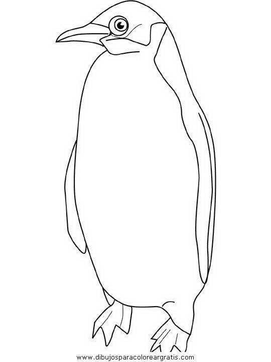 animales/pinguinos/pinguinos_25.JPG