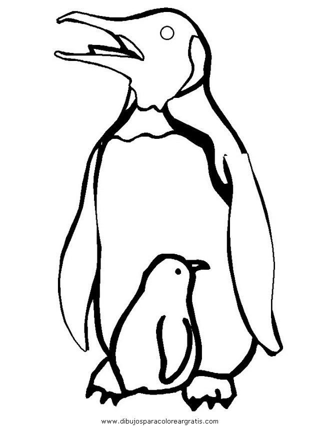 animales/pinguinos/pinguinos_27.JPG