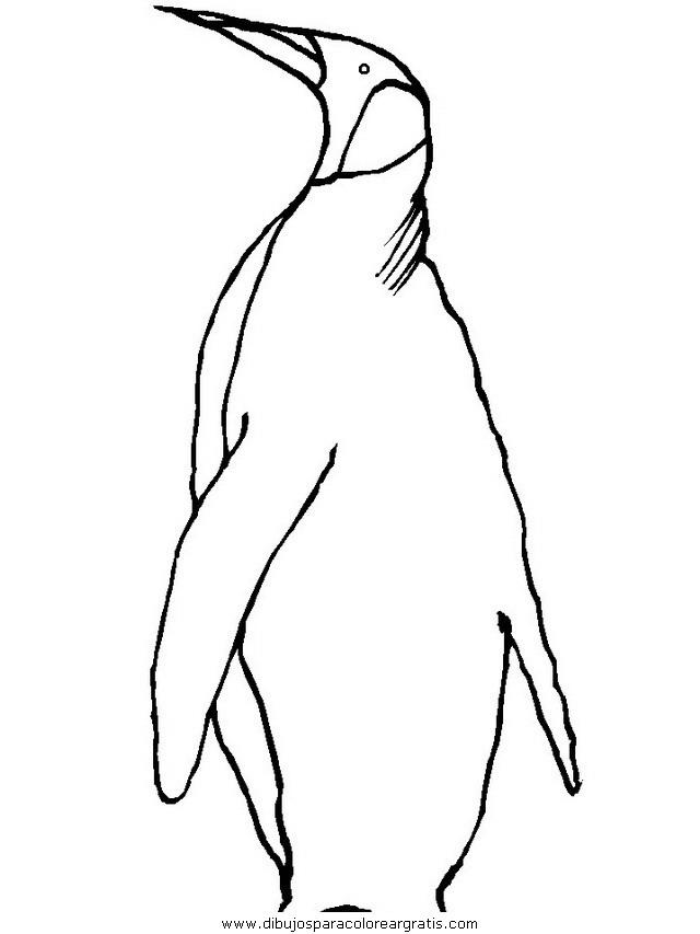 animales/pinguinos/pinguinos_33.JPG