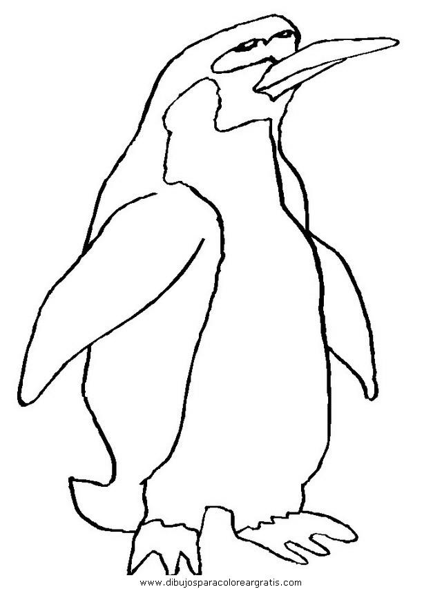 animales/pinguinos/pinguinos_34.JPG