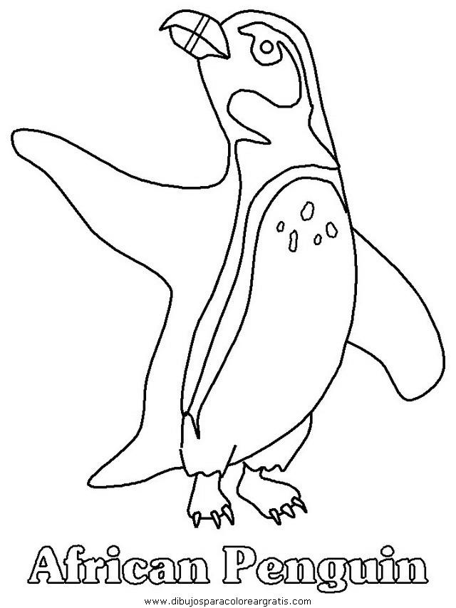 animales/pinguinos/pinguinos_37.JPG