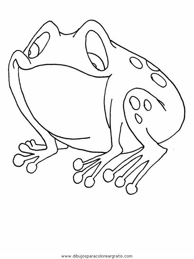 animales/ranas/ranas_10.JPG