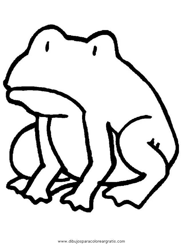 animales/ranas/ranas_15.JPG