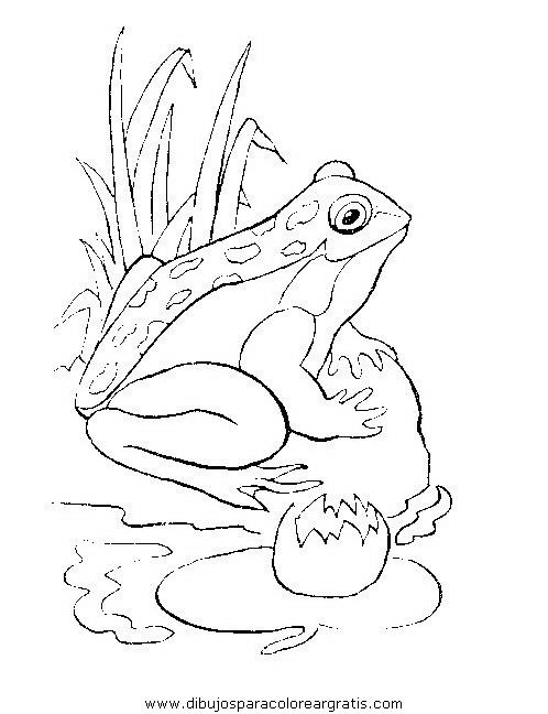 animales/ranas/ranas_39.JPG