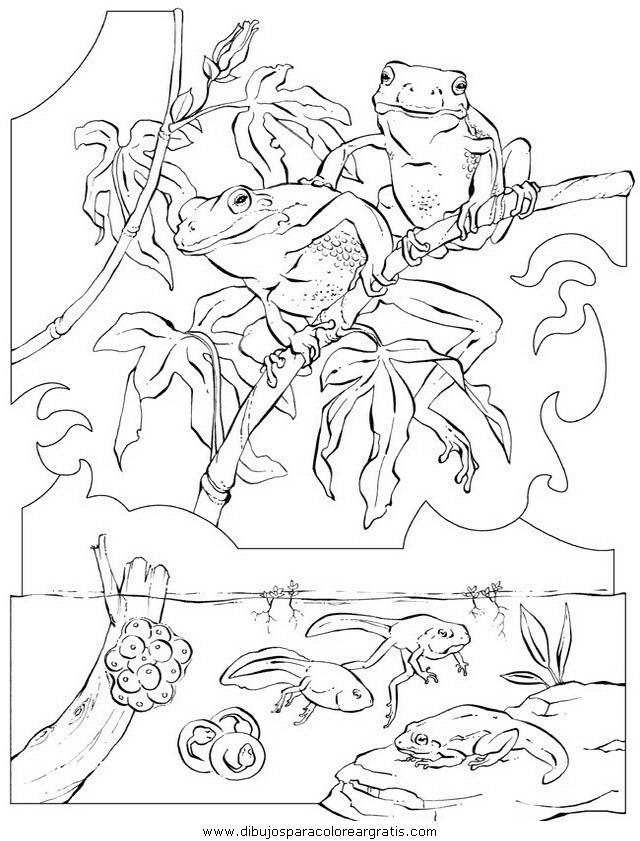 animales/ranas/ranas_40.JPG