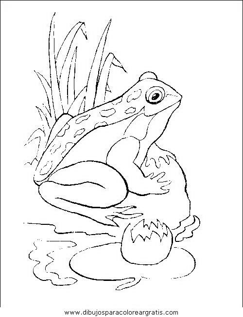 animales/ranas/ranas_58.JPG