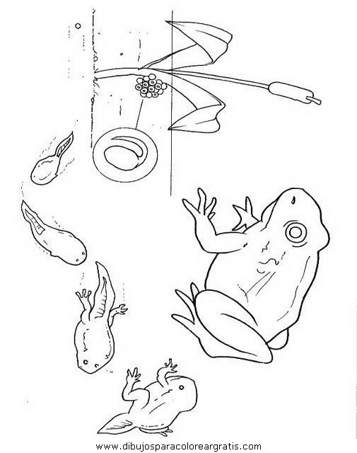 animales/ranas/ranas_60.JPG