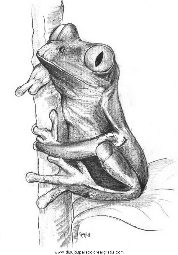 animales/ranas/ranas_61.JPG