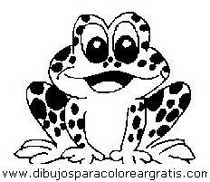 animales/ranas/ranas_62.JPG