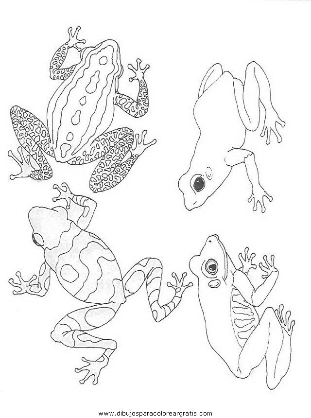 animales/ranas/ranas_64.JPG