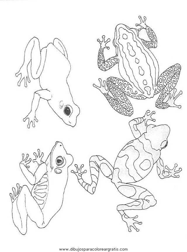 animales/ranas/ranas_65.JPG