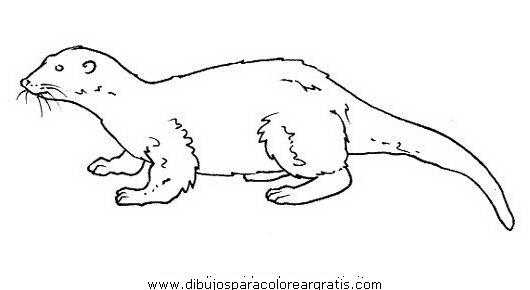 animales/rodedores/nutria_2.JPG