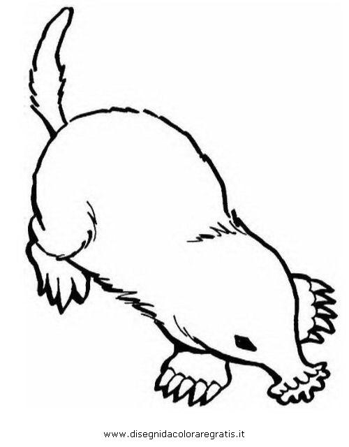 animales/rodedores/topos_6.JPG