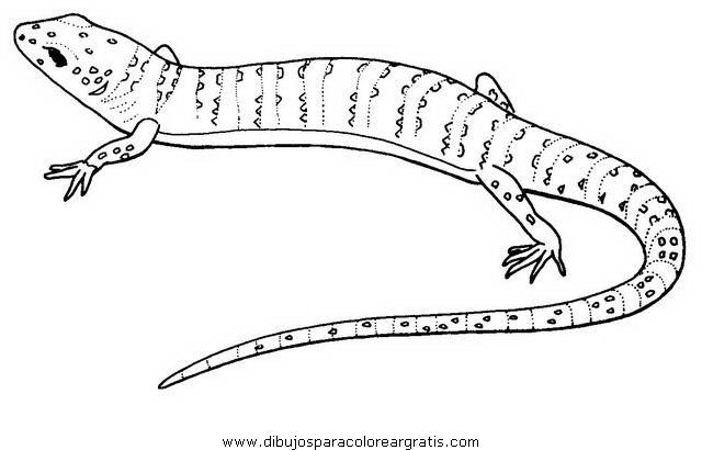 animales/serpientes/lagarto_3.JPG