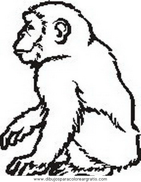 animales/simias/simias_31.JPG