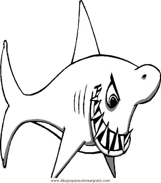 animales/tiburones/tiburones_01.JPG
