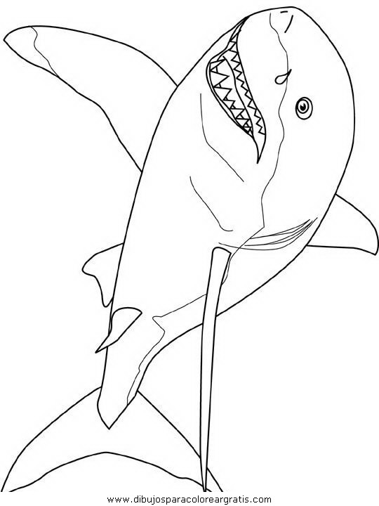 animales/tiburones/tiburones_05.JPG
