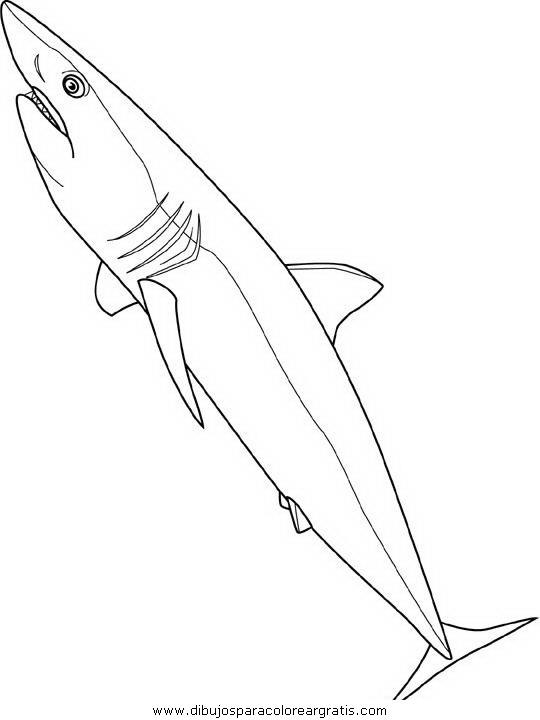 animales/tiburones/tiburones_07.JPG