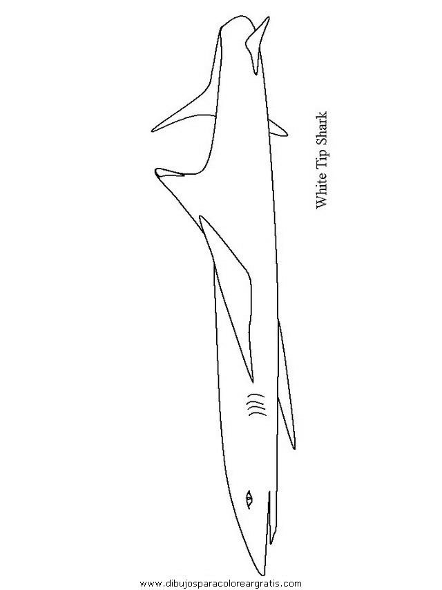 animales/tiburones/tiburones_08.JPG