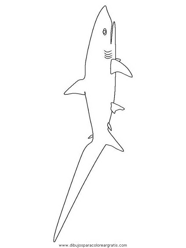 animales/tiburones/tiburones_10.JPG