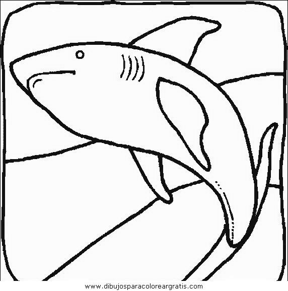 animales/tiburones/tiburones_14.JPG