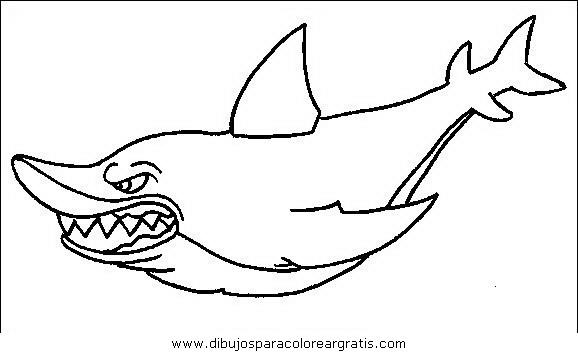 animales/tiburones/tiburones_19.JPG