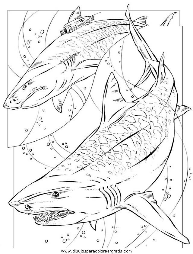 animales tiburones33