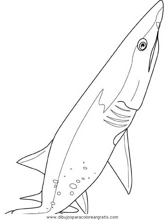 animales/tiburones/tiburones_35.JPG