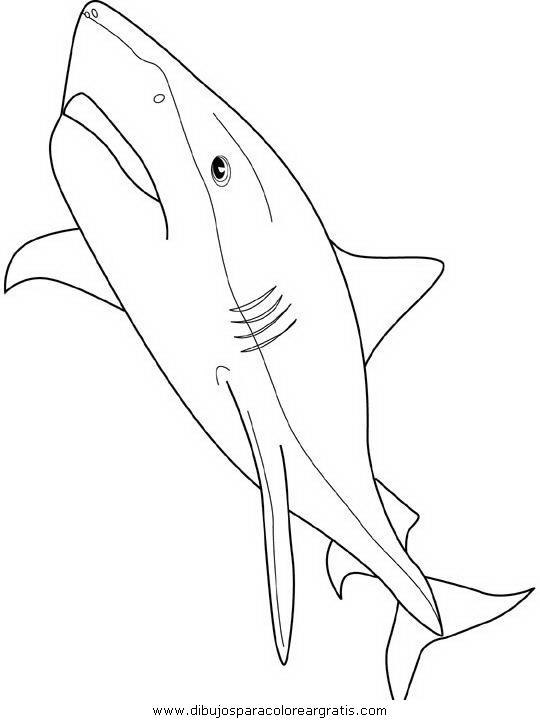 animales/tiburones/tiburones_37.JPG