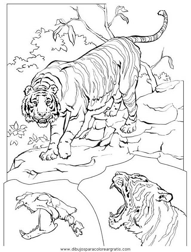 animales/tigres/tigres_04.JPG