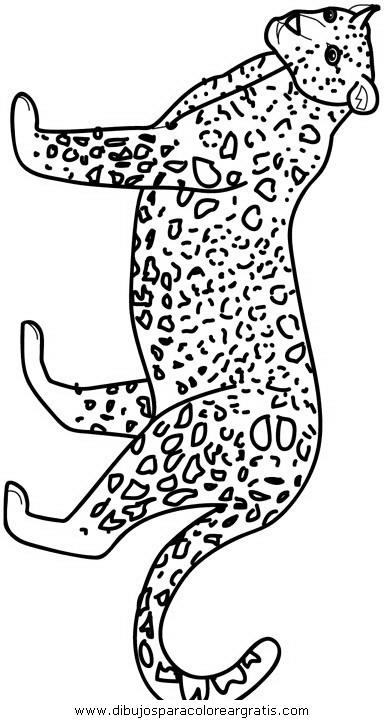 animales/tigres/tigres_06.JPG