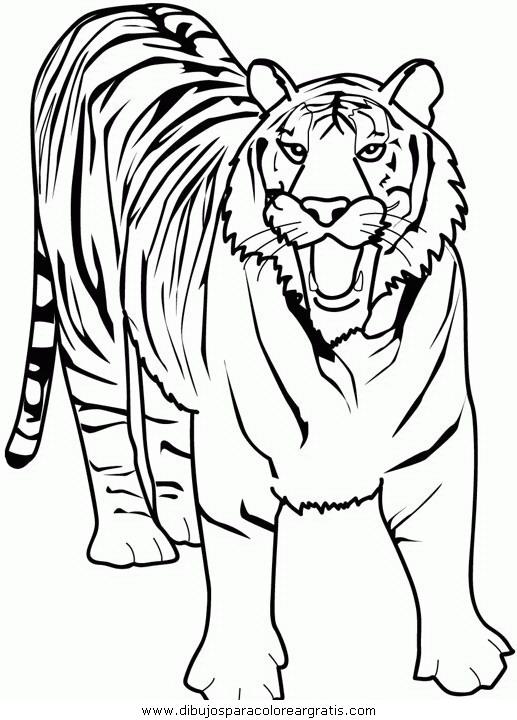 animales/tigres/tigres_07.JPG