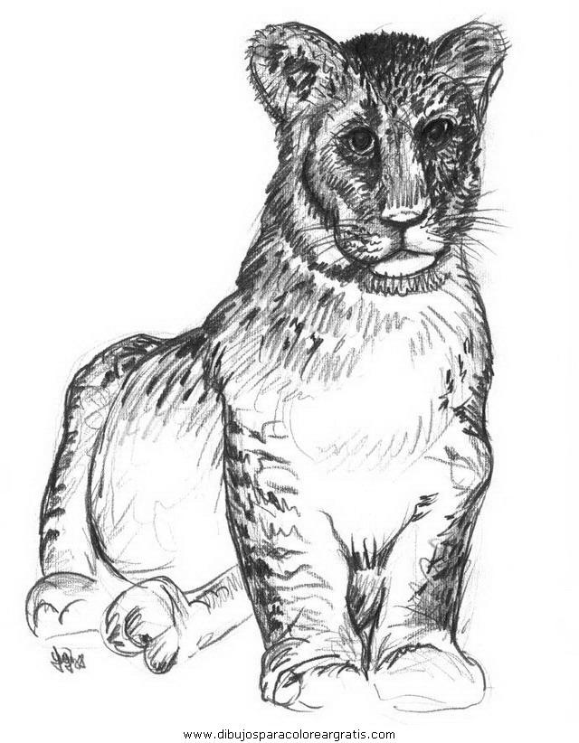 animales/tigres/tigres_12.JPG