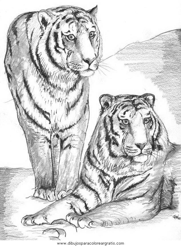 animales/tigres/tigres_13.JPG