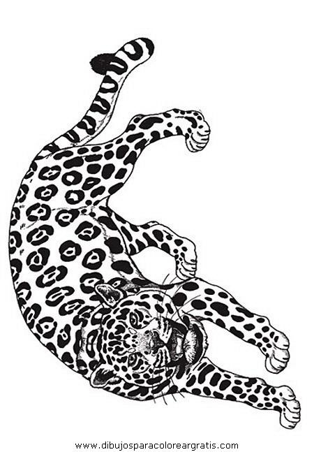 animales/tigres/tigres_15.JPG