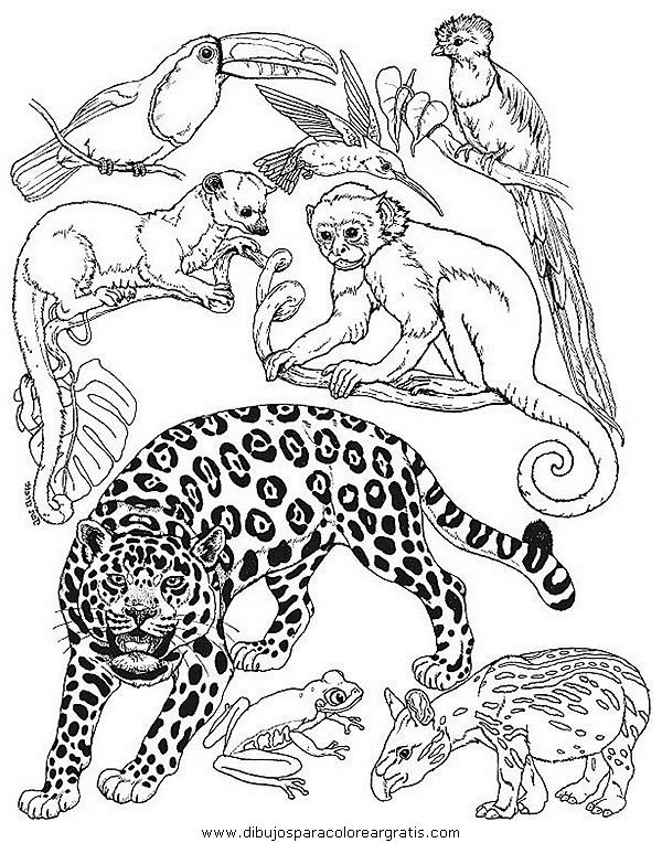 animales/tigres/tigres_16.JPG