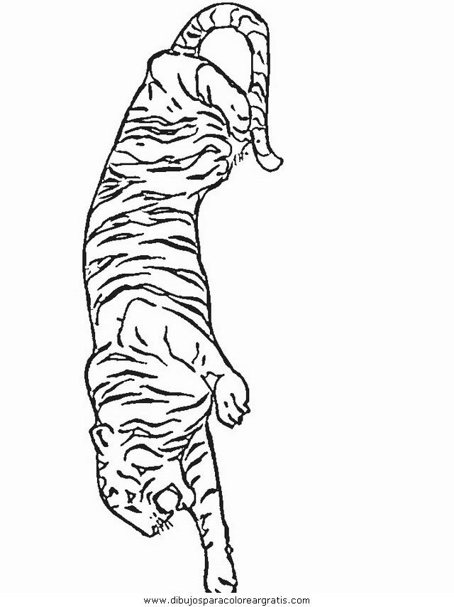 animales/tigres/tigres_28.JPG