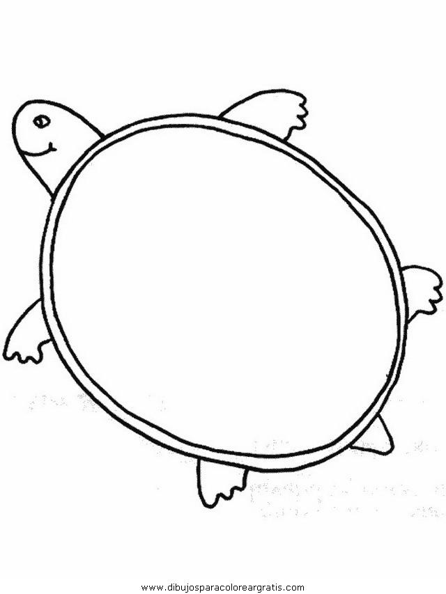animales/tortugas/tortugas_06.JPG