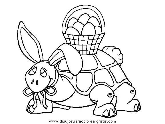 animales/tortugas/tortugas_08.JPG